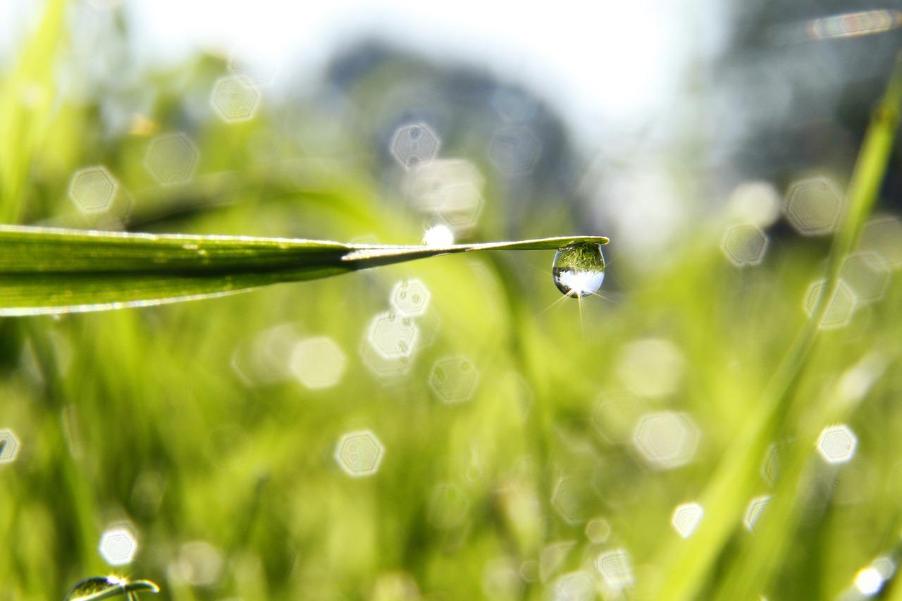 Kropla wody na trawie