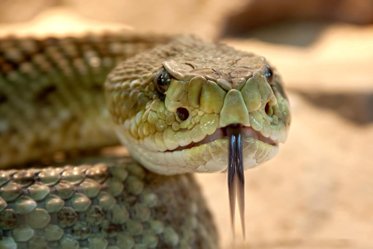 Czy węże są odporne na ukąszenia innych węży?