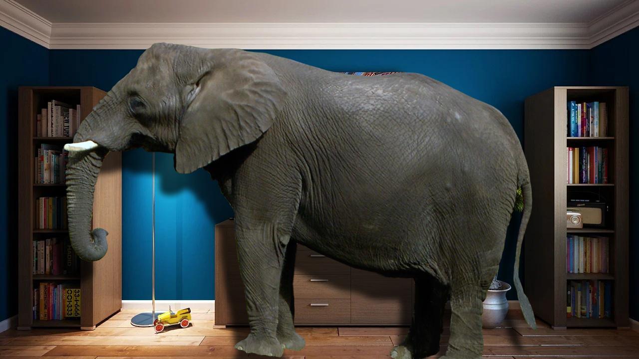 słoń w salonie